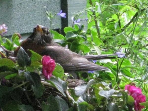 Mother bird...